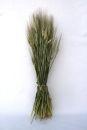 Gerste Deko Getreide natur 65 cm grün Trockengesteck